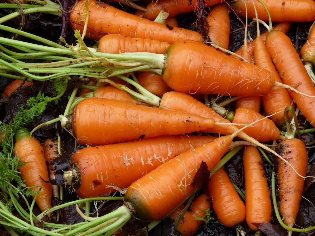 Salt Spring - Happy Carrot Day