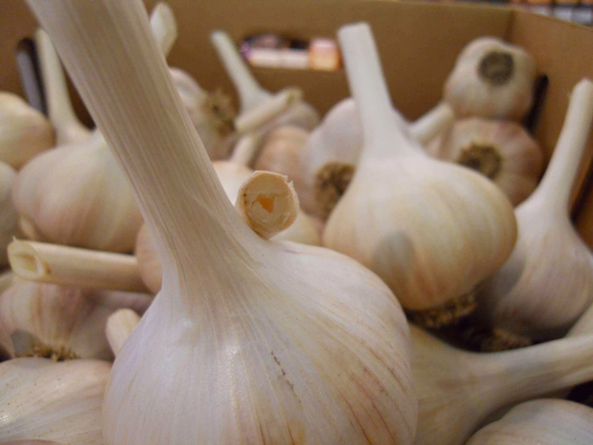 Salt Spring - Garlic Festival and Gods - localgarlic